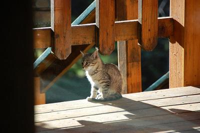 Feral Kitten, Red River, New Mexico, USA - Photo Oakley Boren (Flickr)