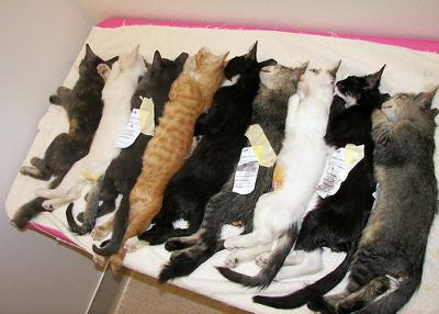 Neutered feral cats after surgery - great but sad photo, thanks - photo by Feral Indeed! (Flickr)