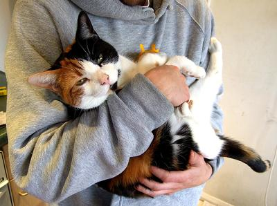 Carrying and cuddling a cat like a baby