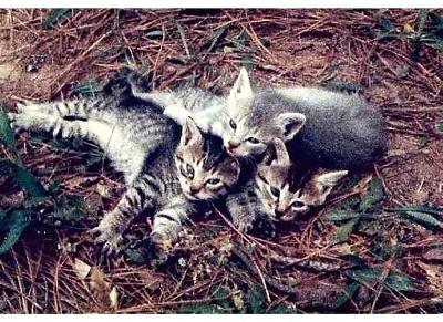 Feral kittens - Please Don't Gas Us