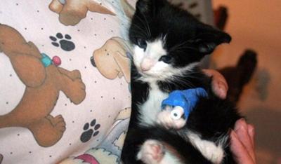 In Memory of Dexter the Kitten | PoC