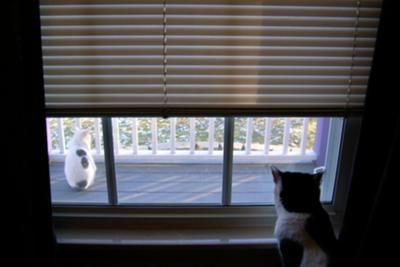Indoors - Outdoors - white on black - black on white cat coats - photo by Maia C