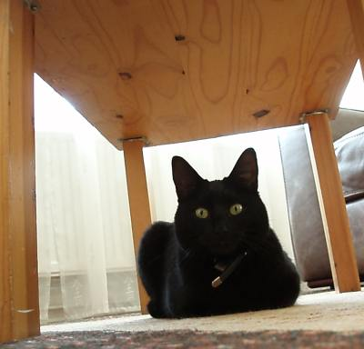 Pippa under a table for protection! (please see base of post)