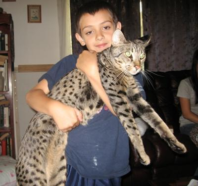 Kadiz Jerah F3B Savannah Cat with  Kadin J. Ashar