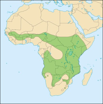 lion range in Africa