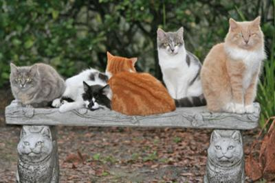 Feral cat community meeting