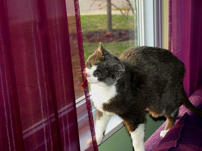 Michael added this Flickr photo of a cat (