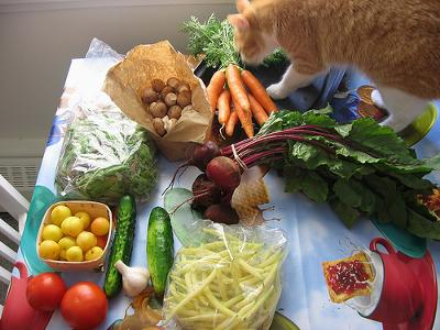 Organic Human Food being checked out by the cat! Photo by aymlis