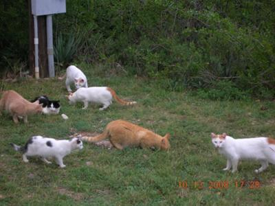 Just a few of our feral cats