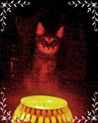 Psychic Cat Furby - photo by Joyce Sammons