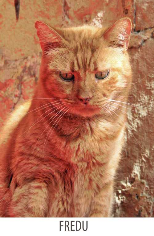Red tabby in Malta was a resourceful cat