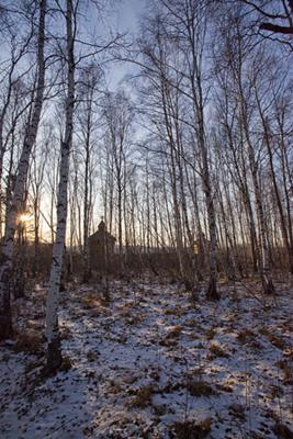 Siberian Birch Woodland - Siberian tiger habitat - Photo by Alex Can On (Flickr)