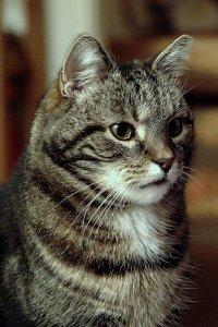 cat animal cruelty laws sweden poc