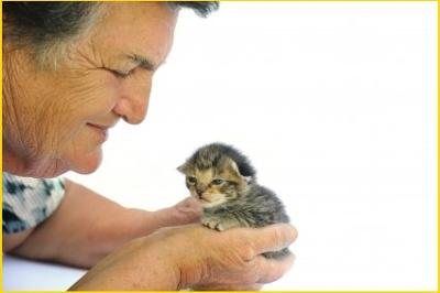 We are the cat's agent or guardian in the Vet/Cat/Us relationship.