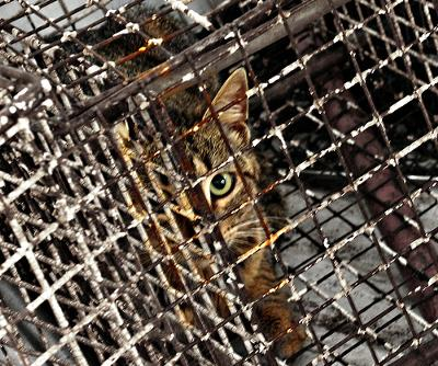 Cat cleared up from street in Israel 2004, to be killed - photo by ofer k