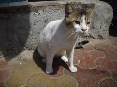 Rajesh (Radhe), the stray cat that defied death. A cat has 9 lives.