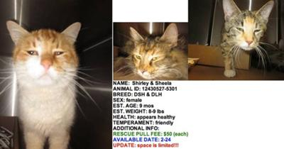 Their euthanasia list photos