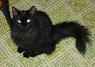 Tiffany Cat Poc