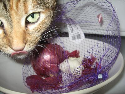 Onions are toxic to cats - photo by Jim (Flickr)