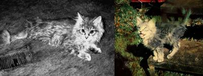 Tramp with FIP (left) and outside the day after I foung him (right)