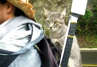 Kitty on Guillaume's backpack as he walks 15,000 kms.