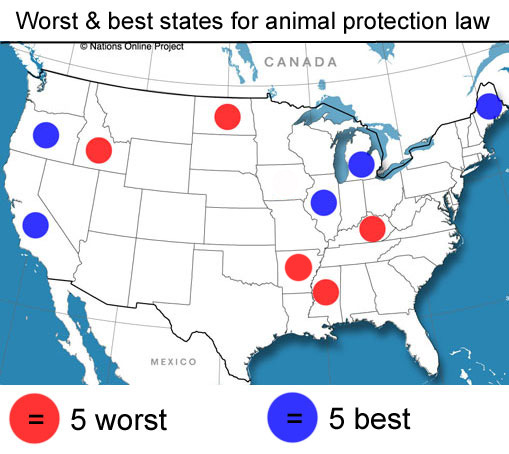 map showing best and worst five USA states for animal protections law
