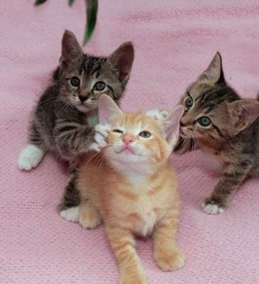 Arn't these kittens just plain adorable?