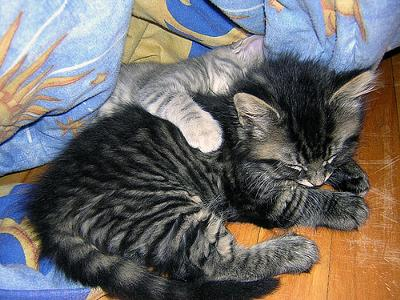 Cat Cuddles - photo by Violet Lilith (Flickr)