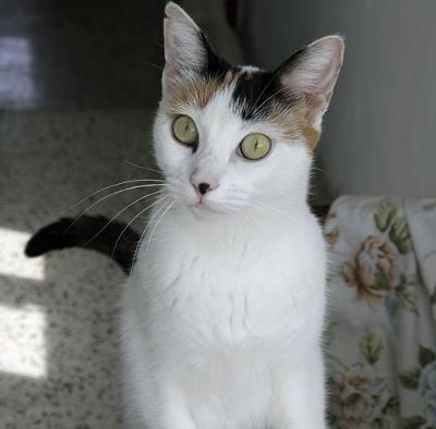 Duchess a stray cat who was unowned - now cared for by Martha Kane in Malta. Photo: Michael @ PoC