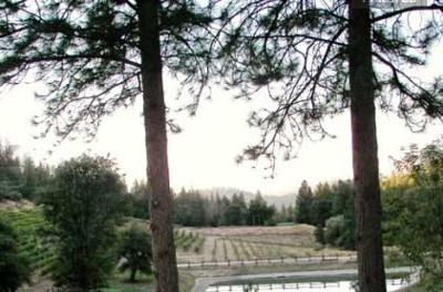 Saluti Cellars winery. View from guest house. Great wine. Great view. Can't ask for more.